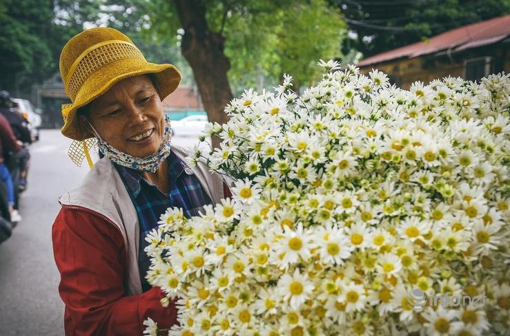 Hà Nội: Cúc họa mi tinh khôi 'xuống phố' đón đông về Ảnh 4