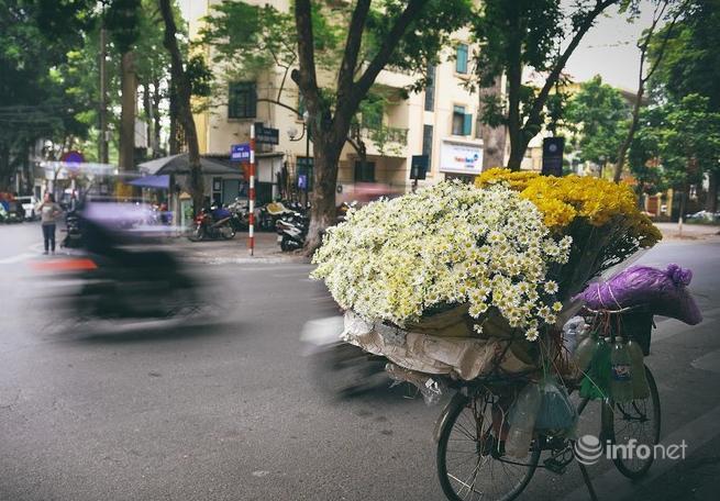 Hà Nội: Cúc họa mi tinh khôi 'xuống phố' đón đông về Ảnh 5