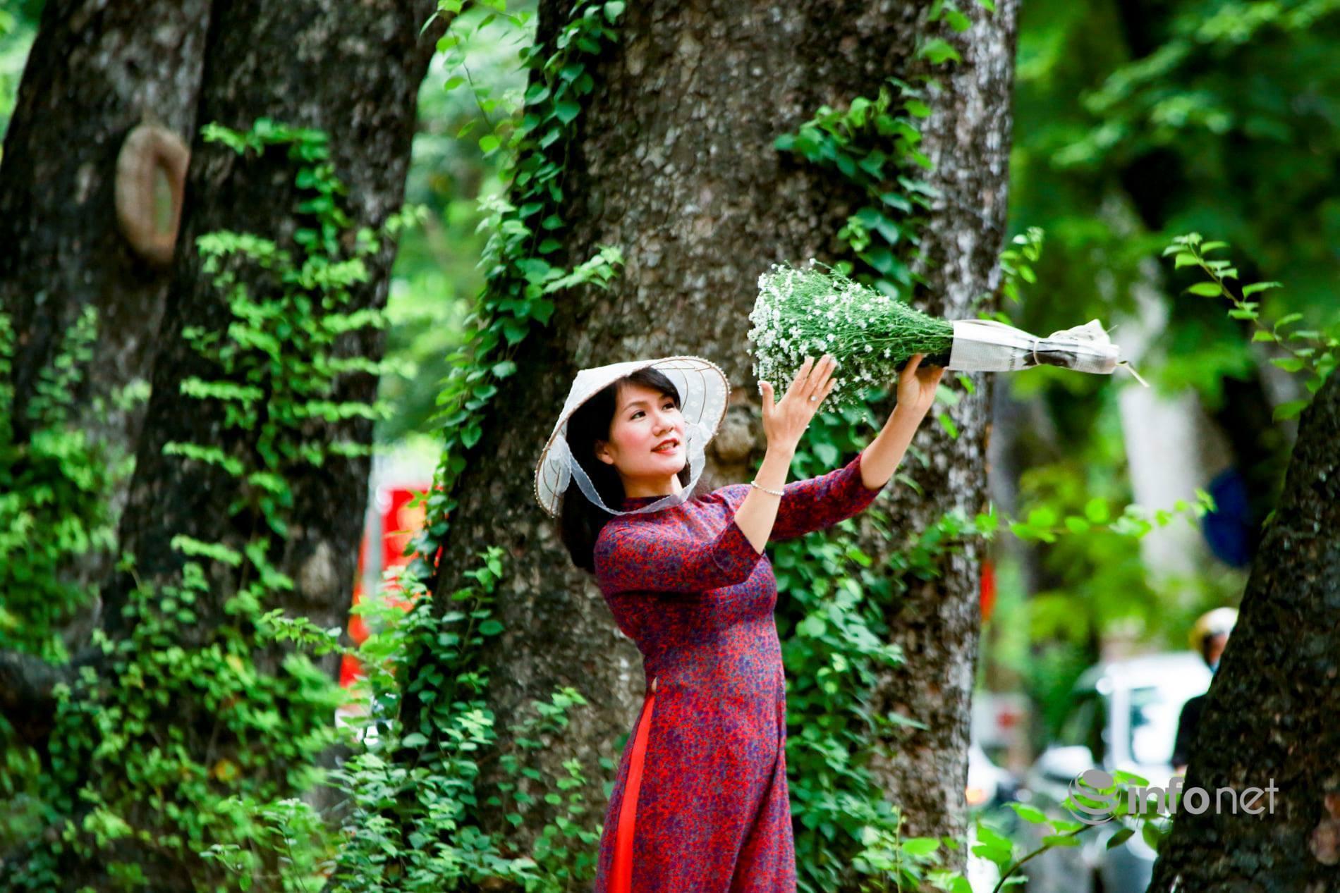 Hà Nội: Cúc họa mi tinh khôi 'xuống phố' đón đông về Ảnh 7