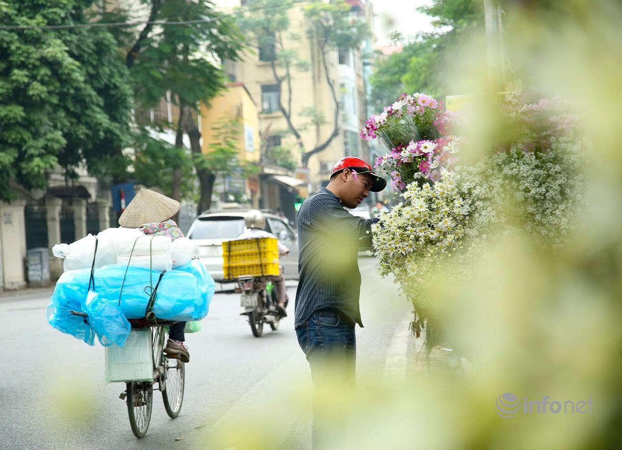 Hà Nội: Cúc họa mi tinh khôi 'xuống phố' đón đông về Ảnh 10