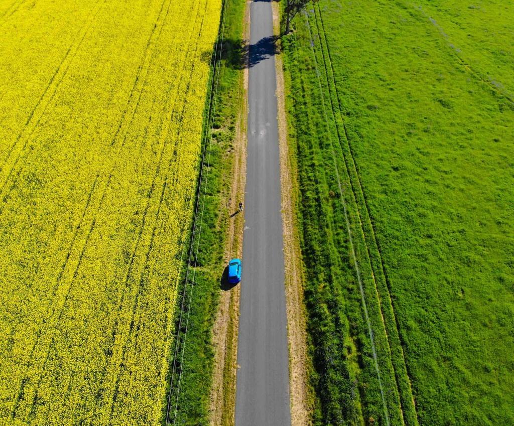 Biển vàng trong mùa cải dầu bội thu ở Australia Ảnh 9