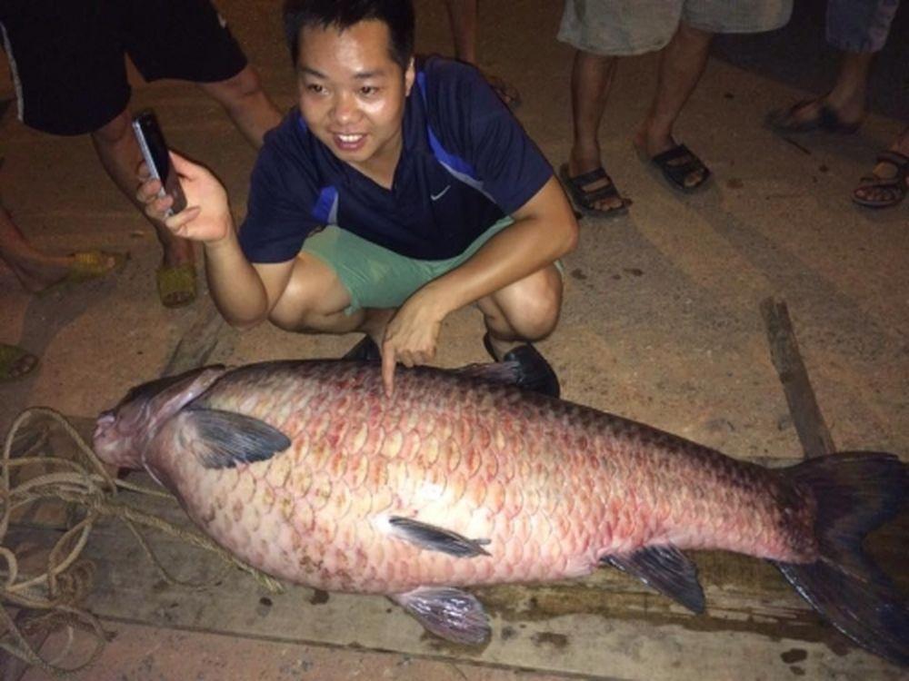 Con cá lúc được người dân đưa lên bờ.