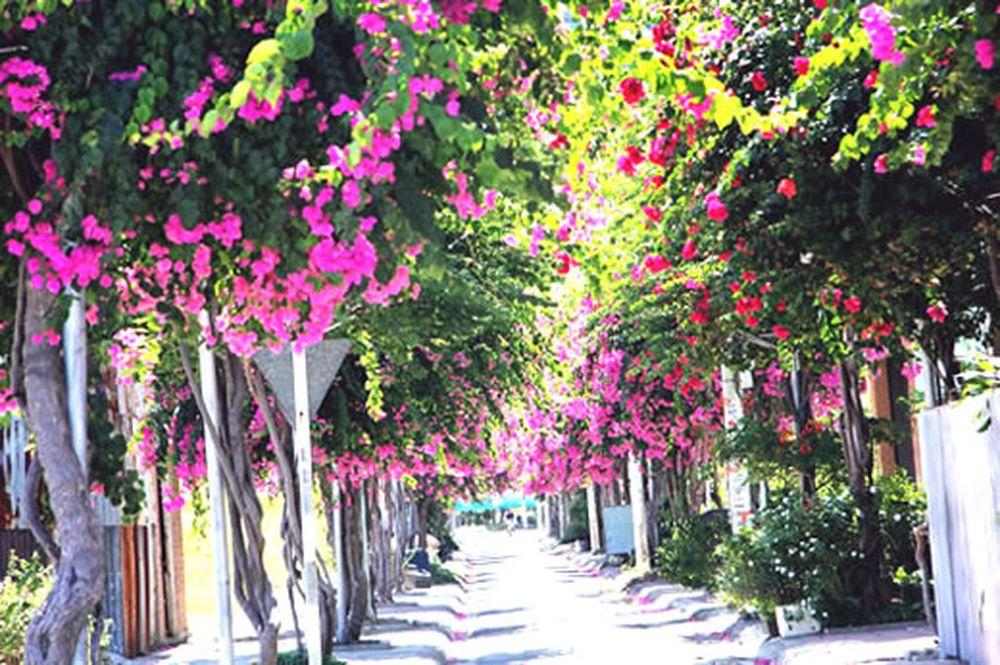 Kết quả hình ảnh cho Đà Nẵng sắp có nhiều đường hoa rực rỡ
