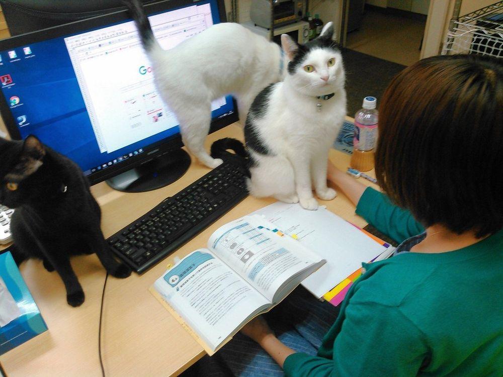 Kết quả hình ảnh cho thú cưng trong văn phòng