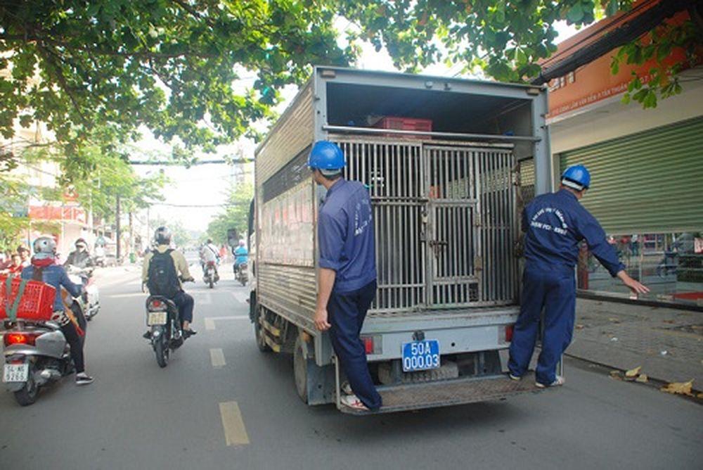 HCM đã thành lập Đội săn bắt chó thả rông để thu gom chó về nuôi nhốt tại  địa chỉ 252, đường Lý Chính Thắng, quận 3.