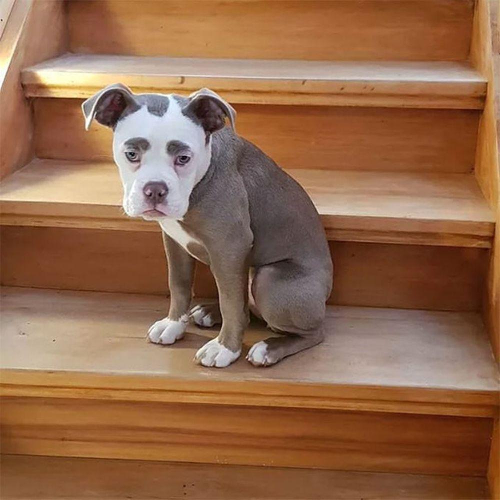 Hầu hết mọi người khi nhìn Madame Eyebrows đều nói rằng trông con chó này hoàn toàn không có chút gì gọi là \
