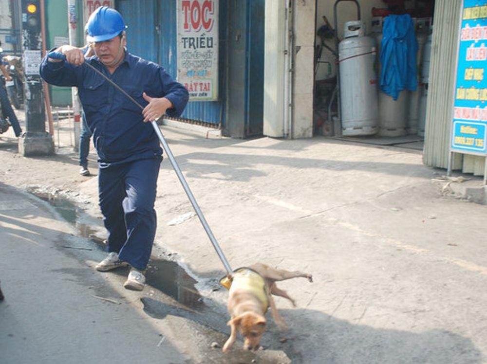 72 giờ tiêu hủy chó thả rông vô chủ: Đừng kêu gào nữa!
