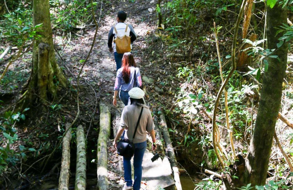Image result for rừng cây phong lá đỏ long đà lạt
