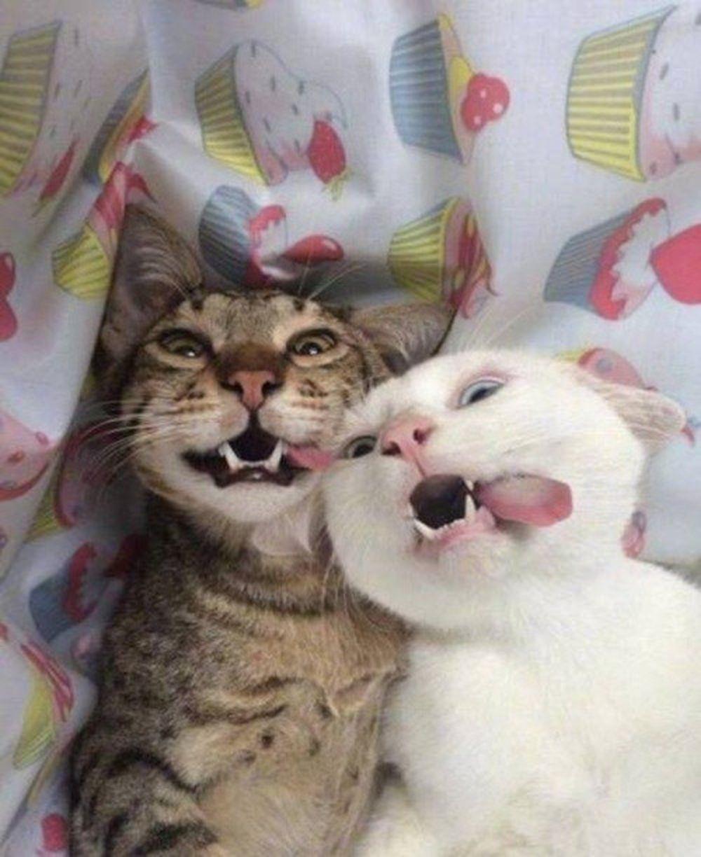 Bực bội vì hình ảnh oai nghiêm của mình bị đem biến thành ngộ nghĩnh hài hước, con mèo cưng quý tộc này khó chịu ra mắt với món quà của chủ nhân.