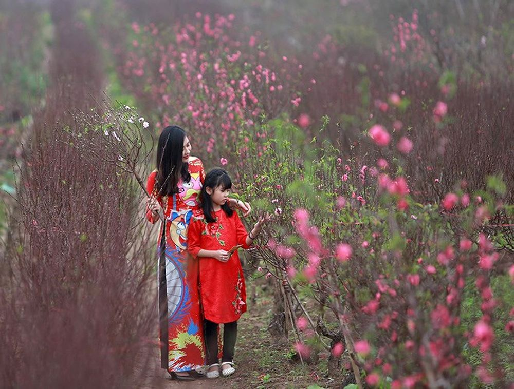 Kết quả hình ảnh cho vườn đào nhat tan chụp cho bé