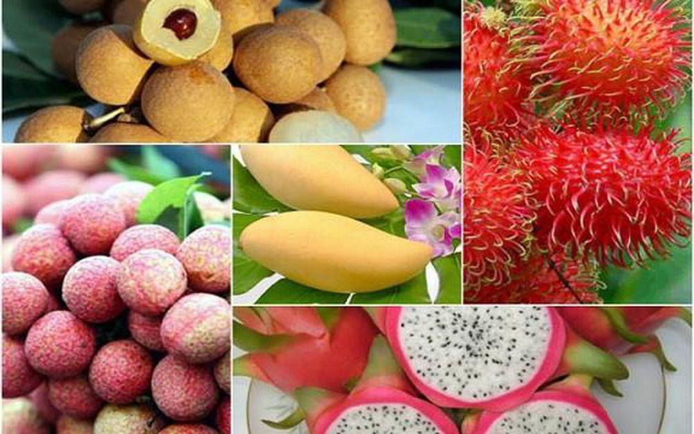 Trong cơ cấu chủng loại quả và quả hạch, Việt Nam có rất nhiều loại quả có lợi thế cạnh tranh và còn nhiều tiềm năng để phát triển như: Thanh long, xoài, dưa hấu, chuối, nhãn, mít, các loại hạt...