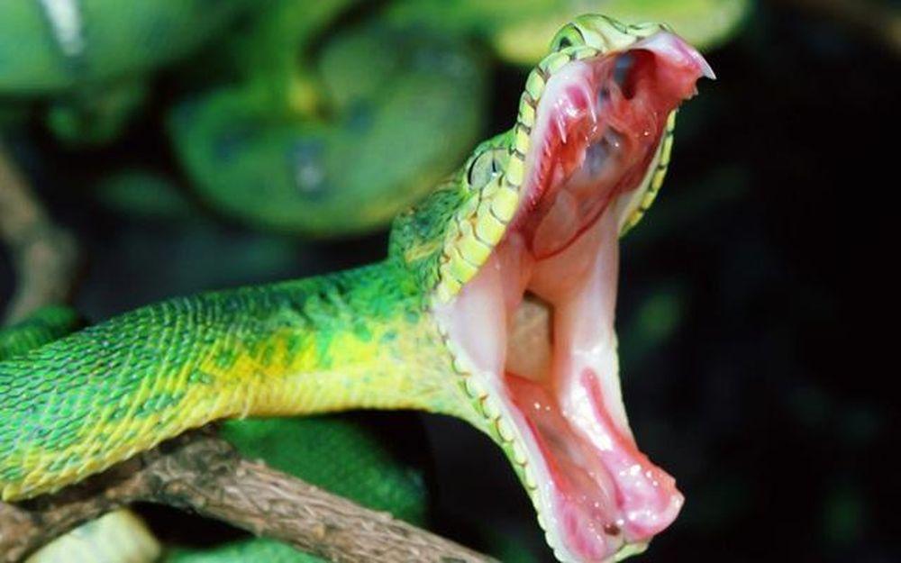 Đề phòng rắn cắn mùa mưa bão và cách sơ cứu khi bị rắn độc cắn - Báo Phụ Nữ Việt Nam