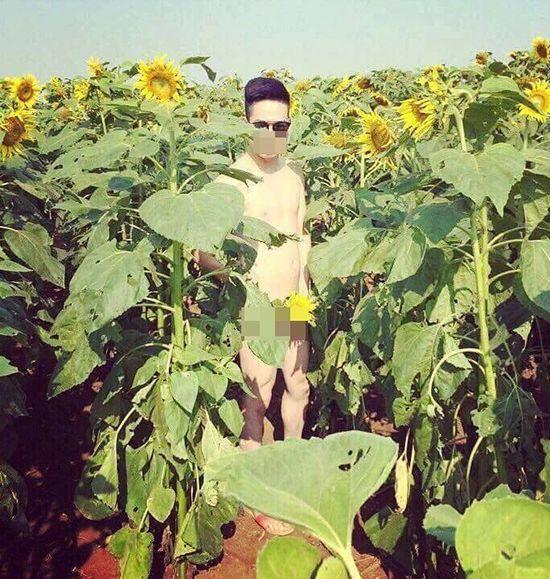 Hình ảnh nam thanh niên trong tình trạng khỏa thân hoàn toàn đứng tạo dáng chụp ảnh ở cánh đồng hoa hướng dương. (Ảnh: Facebook).