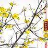 Những loại hoa may mắn và ý nghĩa trưng bày phòng khách mỗi dịp Tết đến Xuân về