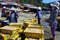 Trúng đậm cá cơm và ruốc, ngư dân Bình Định lãi 10 - 15 triệu đồng/ngày