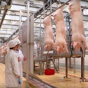 Để giá thịt lợn không còn 'nhảy múa', các DN cần có sự phối hợp