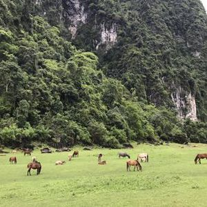 Ở Lạng Sơn có một thảo nguyên hoang sơ