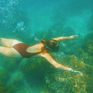 Những rạn san hô rực rỡ trên vùng biển Việt Nam