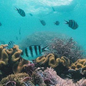 Thế giới san hô rực rỡ sắc màu tại Phú Quốc