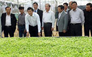 Chủ tịch nước thăm mô hình nông nghiệp công nghệ cao ở Lâm Đồng