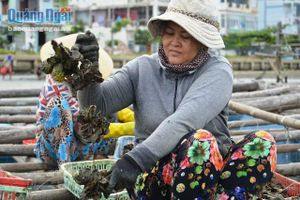 Hệ lụy từ việc nuôi trồng thủy sản chạy theo phong trào