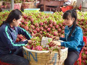 Thương lái Trung Quốc lùng mua đặc sản Việt: Cảnh báo 'bỏ bom'