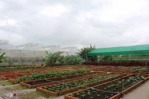 Hỗ trợ đầu tư vào nông nghiệp công nghệ cao