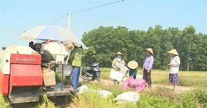 Nghi vấn 'bảo kê' máy gặt ở TT.Lâm Thao: Muốn gặt lúa, phải chi tiền cho cán bộ