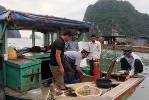 Xử phạt nặng 2 trường hợp khai thác thủy sản bằng nghề lặn
