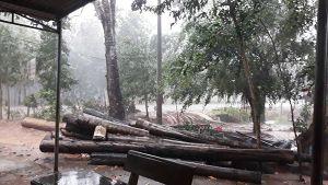 Bình Phước: 'Cần phải khởi tố vụ án phá rừng tại huyện Đồng Phú'