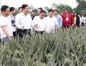 Đoàn đại biểu dự Hội nghị Bộ trưởng Nông Lâm nghiệp ASEAN lần thứ 40 thăm Ninh Bình