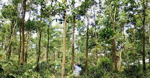Chi trả dịch vụ môi trường rừng
