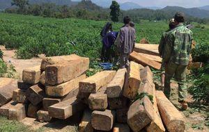 Lâm tặc chém kiểm lâm để cướp gỗ tang vật