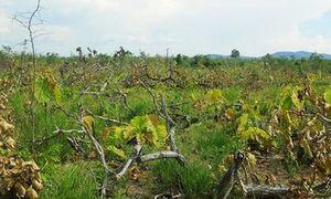 Bắt 'phóng viên' tham gia phá rừng