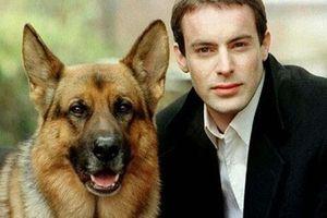 10 chú chó nổi tiếng nhất màn ảnh thế giới mọi thời đại