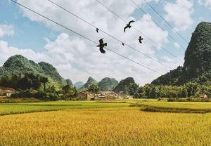 'Thiên đường mùa thu' ở Việt Nam nhất định phải ghé thăm tháng 10 này