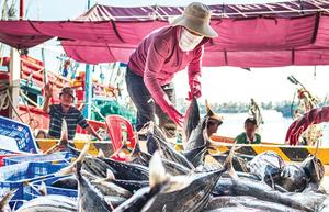'Thẻ vàng' và nỗ lực của ngành thủy sản