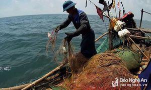 Đi 'săn' loài cá bé tí, khó bắt, kiếm cả triệu đồng mỗi ngày