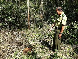 Kiểm lâm vào cuộc, rừng đặc dụng vẫn bị 'xẻ thịt' công khai