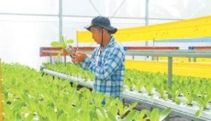 Phát triển sản xuất nông nghiệp công nghệ cao
