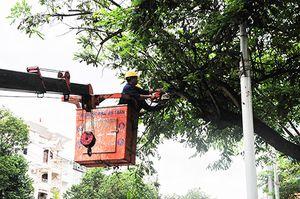 Nha Trang: Cắt tỉa cây xanh trước mùa mưa bão