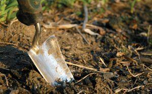 Cặp vợ chồng đào được 6 thỏi vàng trong vườn, 4 năm sau lại đào được vài chục thỏi nữa