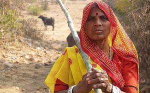 Ra cánh đồng gần nhà đi tiểu, người phụ nữ chết oan uổng vì 1 loài vật ngày càng lộng hành