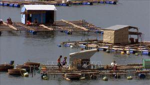 Phú Yên kêu gọi người nuôi cá lồng bè lên bờ để 'chạy' bão số 9