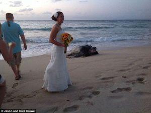 Rùa biển đẻ trứng ngay tại lễ cưới