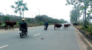 Mất an toàn trên Đại lộ Thăng Long