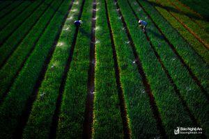 Tiếp tục đổi mới tư duy để tạo ra những đột phá mạnh mẽ trong nông nghiệp