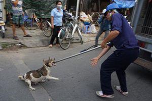 Hà Nội: Đội săn bắt chó thả rông chuyên nghiệp hoạt động từ 2019