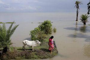 Ngôi làng Ấn Độ mắc kẹt giữa hòn đảo đang chìm dần vì biến đổi khí hậu