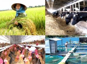 Chuẩn bị đầy đủ nguồn vốn để đáp ứng nhu cầu phát triển 'Tam nông'